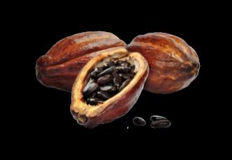 Image de fève de cacao